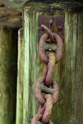 Photograph - Chained - 365-225 by Inge Riis McDonald