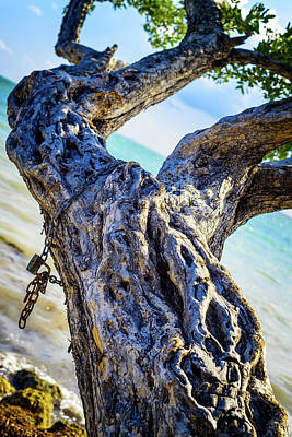 Photograph - Chained by Camille Lopez