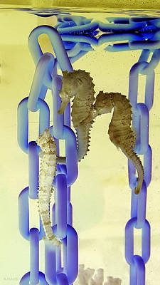 Photograph - Chains And Sea Horses Inverted by Rob Hans