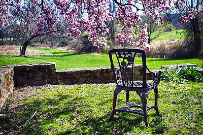 Chair In The Garden Under A Blooming Magnolia Tree Art Print by George Oze