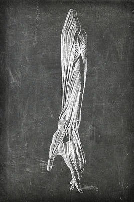 Digital Art - Chalkboard Anatomical Arm 2 by Renee Hong