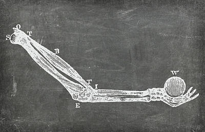 Digital Art - Chalkboard Anatomical Arm Medical Art by Renee Hong