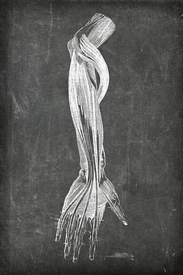 Digital Art - Chalkboard Anatomical Arm by Renee Hong