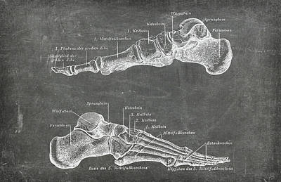 Photograph - Chalkboard Anatomical Foot Medical Art by Renee Hong