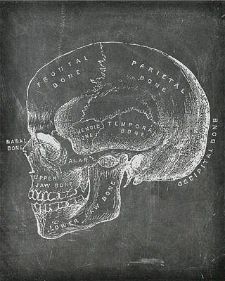 Digital Art - Chalkboard Anatomical Skull by Renee Hong