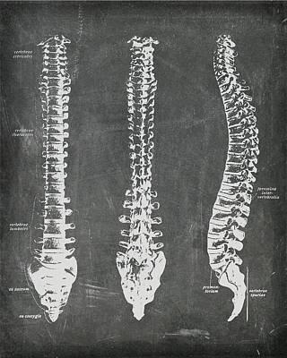 Digital Art - Chalkboard Anatomical Spines by Renee Hong
