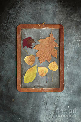 Chalkboard Leaves Art Print by Edward Fielding