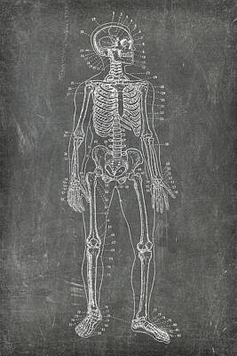 Digital Art - Chalkboard Skeleton Medical Art by Renee Hong