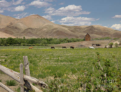 Photograph - Challis Pasture by Idaho Scenic Images Linda Lantzy