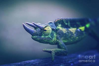 Photograph - Chamaeleo Jacksonii by Sharon Mau