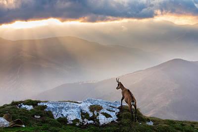 Light Rays Photograph - Chamois In Piatra Craiului Romania by Dan Mirica