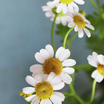 Photograph - Chamomile Dream 2- Art By Linda Woods by Linda Woods