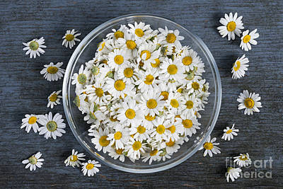 Chamomile Flowers In Bowl Art Print by Elena Elisseeva