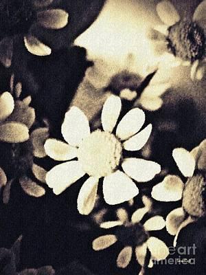 Photograph - Chamomile Memories 2 by Sarah Loft