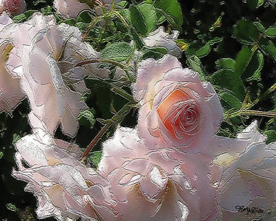 Photograph - Champagne Roses #001 by Barbara Tristan