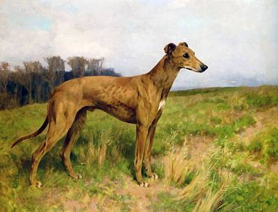 Animals Drawings - Champion Greyhound Dee Flint by Arthur Wardle
