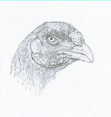Farmyard Drawing - Champion Malay Hen In Pencil by Susan Baker