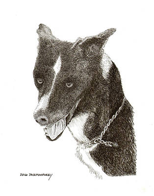 Dog Art Drawing - Chance by Jack Pumphrey