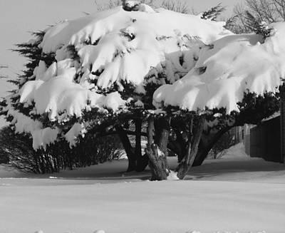 Chance Of Snow Art Print by Nicholas J Mast