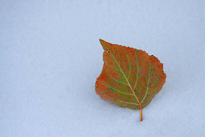 Photograph - Change Of Seasons by Marie Leslie