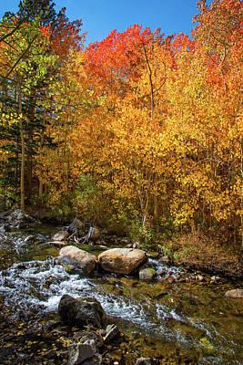 Photograph - Changing Aspens Along Bishop Creek by Lynn Bauer