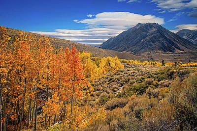 Photograph - Changing Aspens At Mcgee Creek by Lynn Bauer