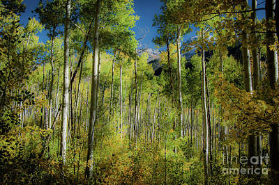 Photograph - Changing Aspens_160925_1800a by Donna Sizemore