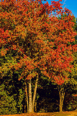 Changing Colors Of Autumn Art Print by Barry Jones