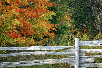 Split Rail Fence Photograph - Changing Leaves by Maria Keady