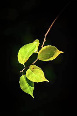 Photograph - Changing Leaves by Robert Mitchell