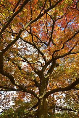 Photograph - Changing Of The Oak by David Birchall