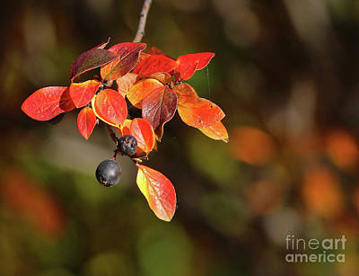 Photograph - Changing Season by Ann E Robson