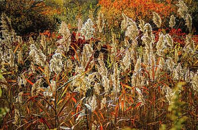 Photograph - Changing Season by Robert Mitchell