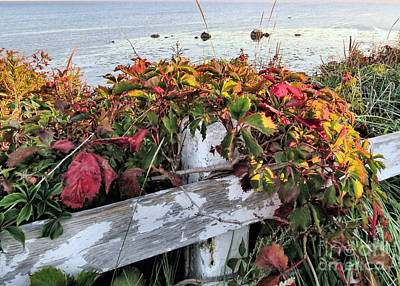 Photograph - Changing Vegetation Manomet Point by Janice Drew