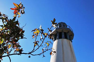 Photograph - Channel Islands Harbor Lighthouse - Autumn Tree by Matt Harang