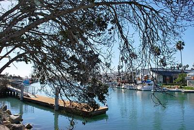 Photograph - Channel Islands Harbor - Tree Overhang by Matt Harang