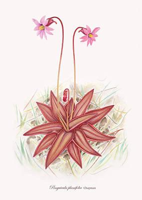 Chapman's Butterwort Art Print by Scott Bennett