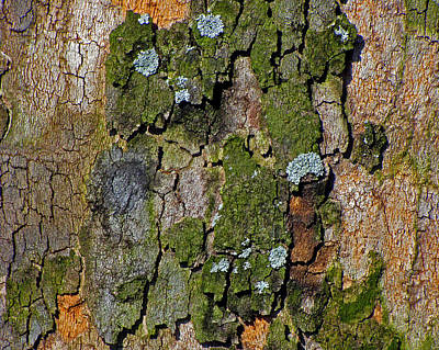 Photograph - Character Of Bark by Lynda Lehmann