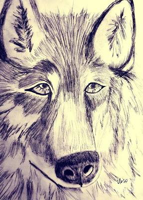 Drawing - Charcoal Wolf by Maria Urso
