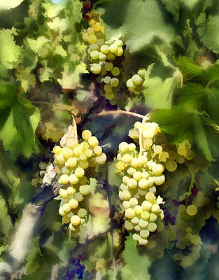 California Vineyard Digital Art - Chardonnay by Kurt Van Wagner