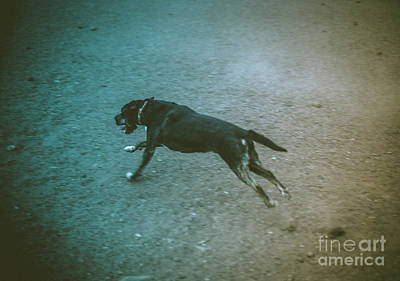 Photograph - Charge by Scott Sawyer