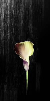 Digital Art - Charger Lily by Sheila Mcdonald