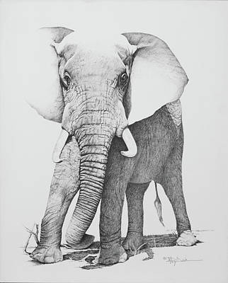 Elephant Pencil Drawing Drawing - Charging Elephant by Mary Dove