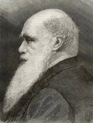 Portrait Old Age Drawing - Charles Darwin 1809 - 1882. English by Vintage Design Pics
