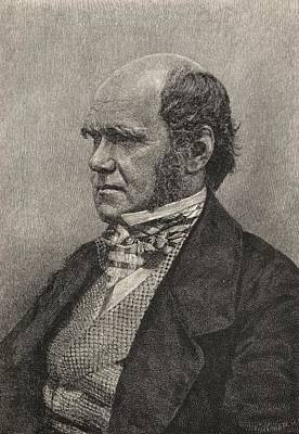 Selection Drawing - Charles Darwin,1809  1882 Aged 45 by Vintage Design Pics
