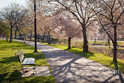 Photograph - Charles River Cherry Trees by Susan Cole Kelly