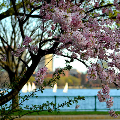 Photograph - Charles River Four Seasons Spring Sailboats by Toby McGuire