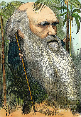 Photograph - Charles Robert Darwin by Granger
