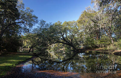 Photograph - Charles Towne Landing Sc by ELDavis Photography