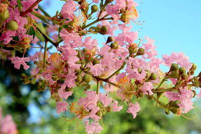 Charleston Blossoms Art Print
